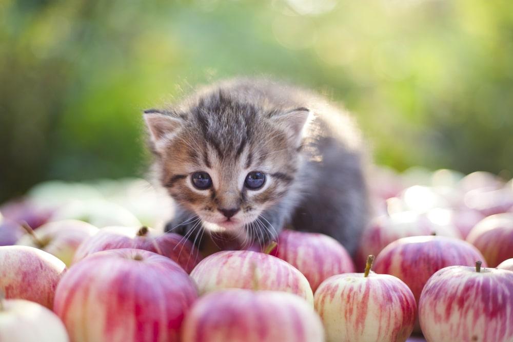 猫が食べてもOKな果物