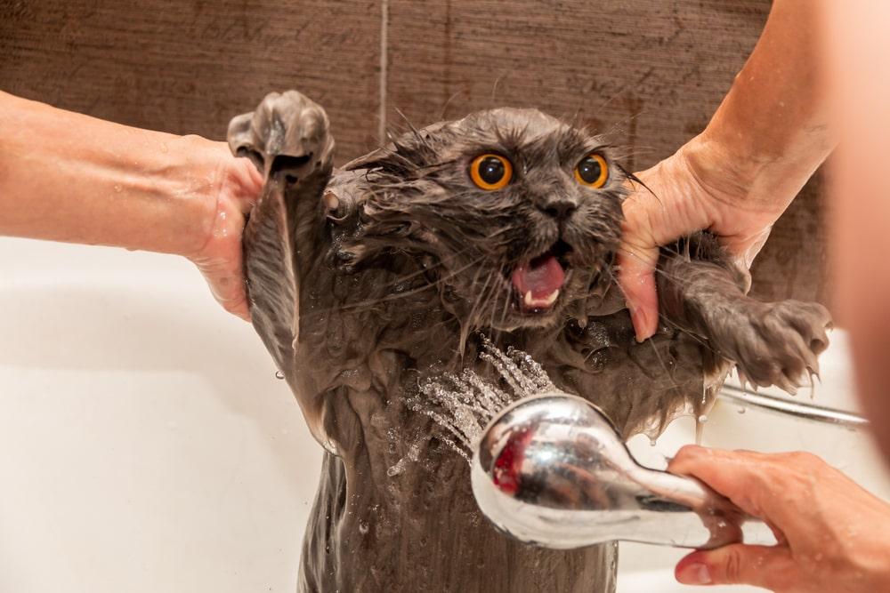 猫のお風呂の前に確認&準備してほしいこと