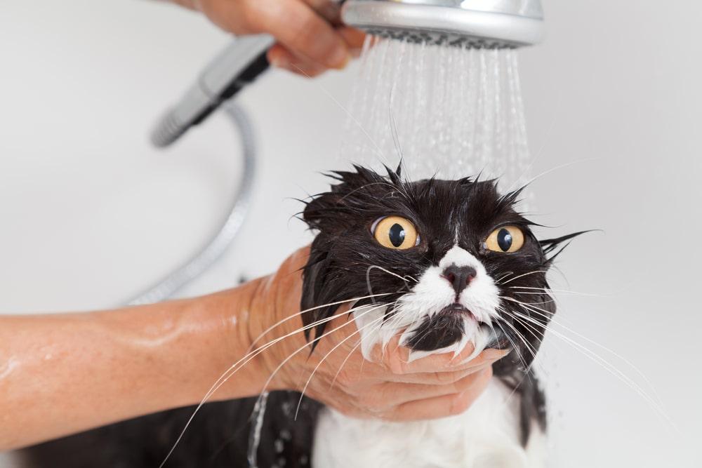 シャワーの基本は「ぬるめ」&「弱め」