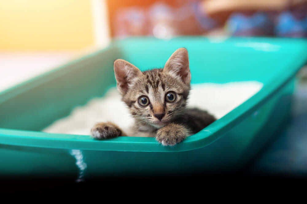 猫のトイレ数は「頭数+1個以上」が理想