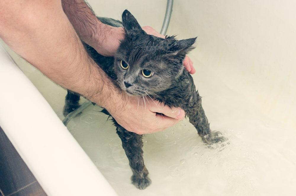 思い切ってシャワーヘッドを替えてみる