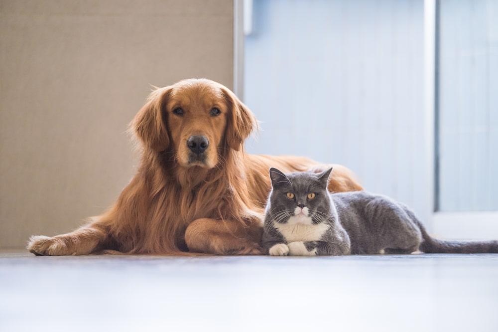 猫だけでなく家全体への対応が必要