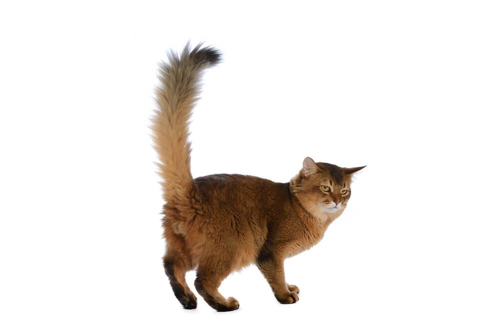 しっぽから猫の気持ちを探ってみよう(ネガティブ編)