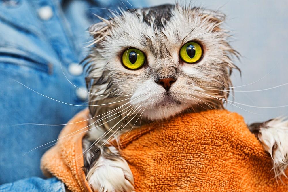 寒い日のお風呂は猫にとっても魅力的?