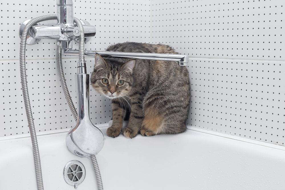 猫の急な強いニオイは病気のサインかも