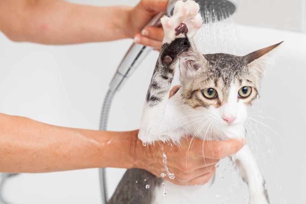 赤ちゃんを洗うように優しくスピーディーにお風呂に入れる