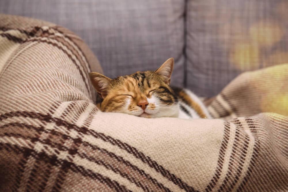 猫が「またたび」にメロメロになる理由