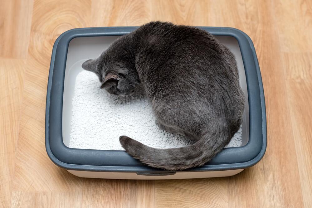 猫のトイレ本体を選ぶときのポイントは?