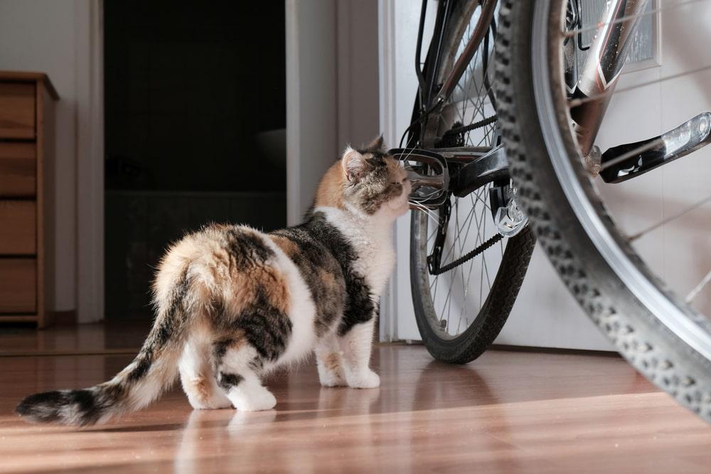 猫を自転車に乗せるときはここにも注意!
