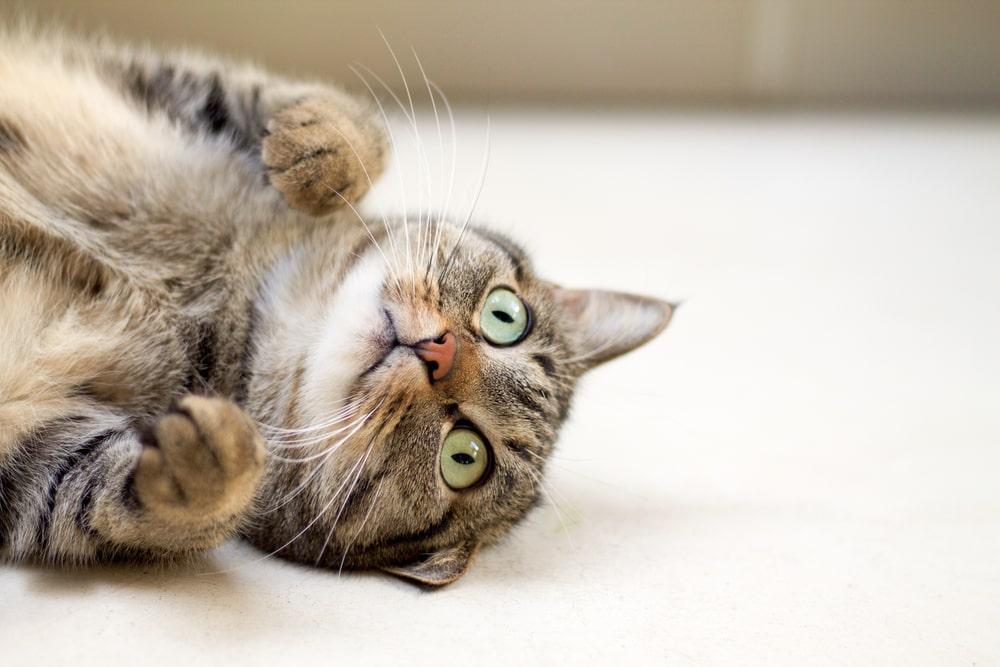 猫のトイレやフードは小まめに片づけるのが鉄則!