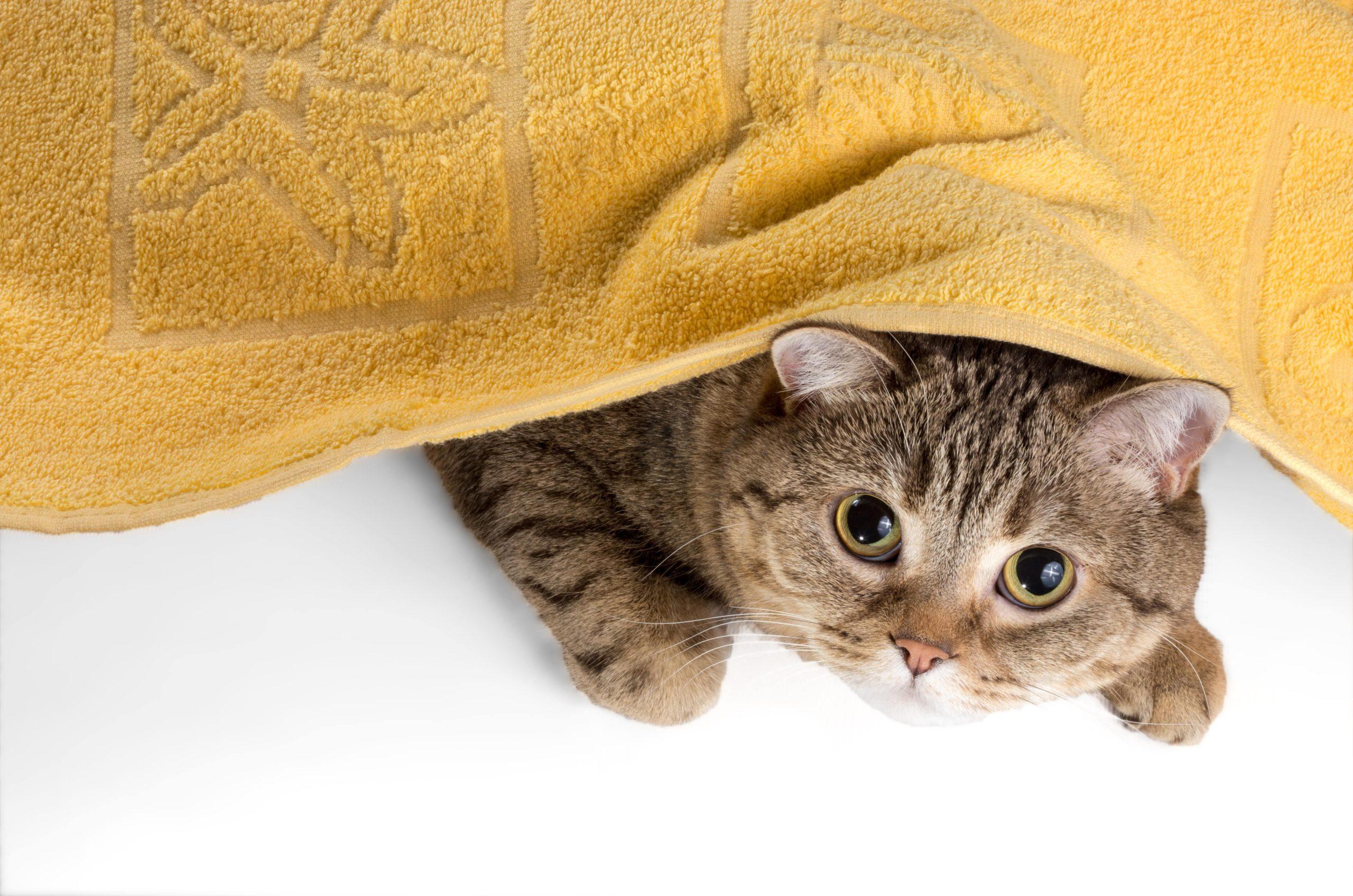 どうしてもシャワーが苦手な猫もいる