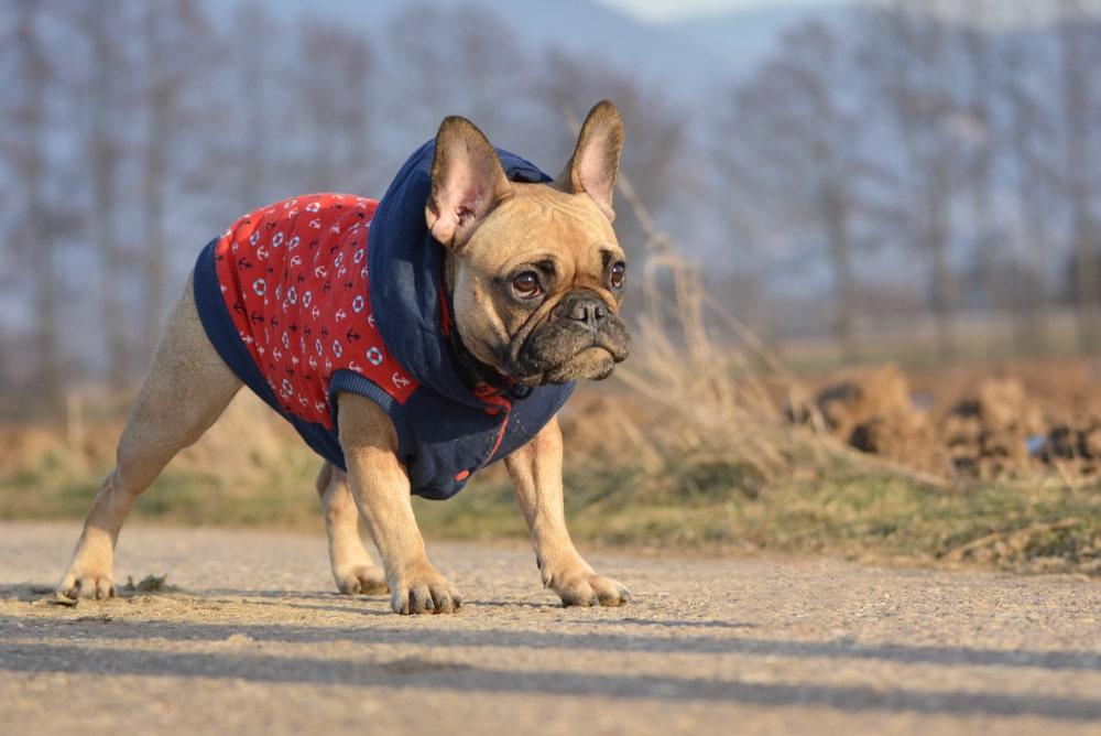 犬の適温は「気温×湿度」で考えよう